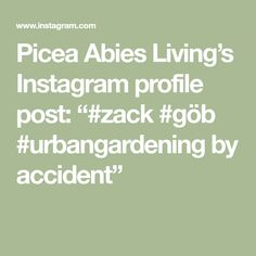 "Picea Abies Living's Instagram profile post: ""#zack #göb #urbangardening by accident"""