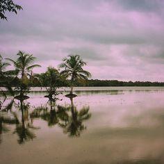 കമരക #nature#naturephotography#nature_perfection#naturelover#instanaturelover#natureaddicts#outdoors#countryside#keralatourism#beautiful#outdoorsman#godsowncountry#fitness#photooftheday#photography#storiesofindia.#travellers#backpackersKerala is known for its panoramic backwater stretches lush green paddy fields highlands and beaches. A major backwater stretch lies in Kottayam district where a network of rivers and canals empty into the great expanse of water called the Vembanad Lake…