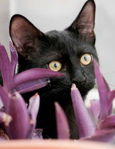 MORITO - Gato adoptado - AsoKa el grande