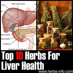 Top 9 Herbs For Liver Health ►► http://www.herbs-info.com/herbs-for-liver.html?i=p