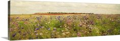 A creative blend of photography and traditional techniques, this panoramic image of a flower filled field from Amy Melious is a great way to add a classical and beautiful work of art to your home. See all available options and sizes at GreatBIGCanvas.com