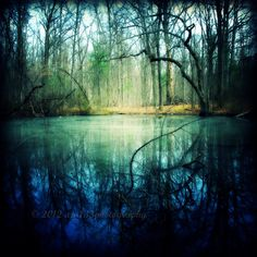 SALE 30 OFF Enchanted Forest Photography  The by ara133photography, $7.00