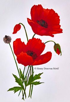 Original artwork by Henny Donovan of the Red Poppy Oil Painting Flowers, Fabric Painting, Watercolor Cards, Watercolor Paintings, Remembrance Day Art, Wild Poppies, Wood Art, Flower Art, Beautiful Flowers
