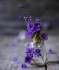 Dark Flowers, Pastel Flowers, Simple Flowers, Pretty Flowers, Vintage Flowers, Purple Flowers Wallpaper, Flower Phone Wallpaper, Beautiful Flowers Wallpapers, Valley Of Flowers