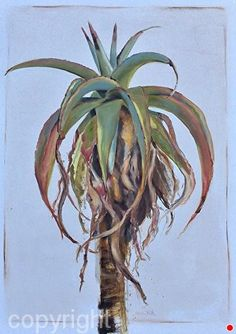 Wild coast aloe by Nicola Firth Oil ~ x Botanical Drawings, Botanical Prints, Flower Artwork, Flower Paintings, Watercolor Succulents, Whimsical Art, Watercolor And Ink, African Art, Amazing Art