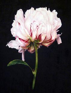 Botanical Print Peony on Black botanical watercolour fine