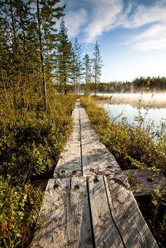 Boardwalk (Lapland, Finland) by Andrey Gravitiskiy cr.