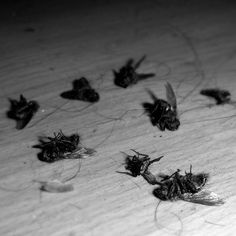 It's getting cold in Finland, they're dropping like flies around here! Time for a sweep-up I think! #winteriscoming #flies #cleanup #instalike #fly #insect #dead #death #rip #cold #instagood #droppinglikeflies