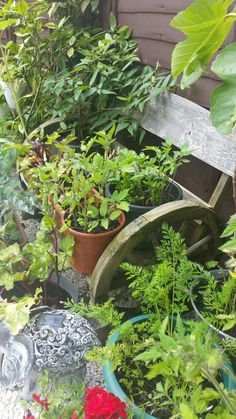 Bench pot stand with honeysuckle growing around