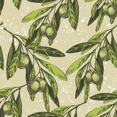 Free Olive Branch Vector