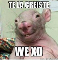 Trendy Memes Para Contestar Amor Ideas #memes