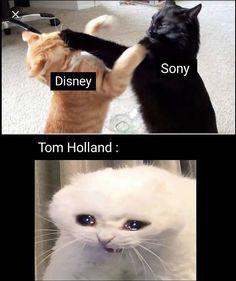 Disney & Sony Spiderman Tom Holland MCU The post Disney & Sony Spiderman Tom Holland MCU appeared first on Marvel Memes. Avengers Humor, Marvel Jokes, Funny Marvel Memes, Dc Memes, Funny Animal Memes, Stupid Funny Memes, Funny Relatable Memes, Funny Animals, Marvel Avengers