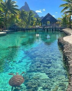 Vacation Places, Dream Vacations, Vacation Spots, Beautiful Places To Travel, Cool Places To Visit, Places To Go, Amazing Places, Bora Bora Bungalow, Bora Bora Island
