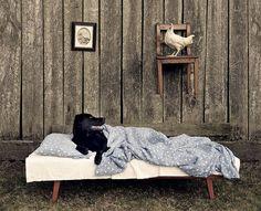 Sebastian Łuczywo na swoich fotografiach przedstawia w dość specyficzny sposób życie na wsi swojej rodziny. W skład jego domowego zwierzyńca wchodzą: dwa dorosłe psy, 3 szczeniaki, kot i świnka morska. Sam artysta twierdzi, że zwierzęta są dla niego bardzo ważne i to jego najlepsi przyjaciele. Źródło: