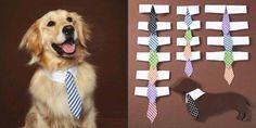Moda fashion pet: coleira para cachorros em forma de gravata