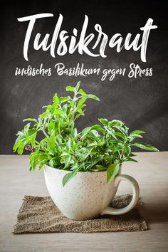 Tulsikraut – indisches Basilikum gegen Stress How to Eat Boost Your Immunity System Wouldn't it … Ayurveda, Rainbow Fruit, Stress, Improve Metabolism, Medicinal Herbs, Fermented Foods, All Plants, Kraut, Planter Pots