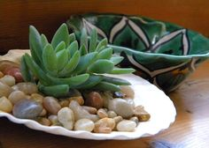 Sea Shell Planter Ideas to Show Off your Plants | Ideas for Displaying Seahells | Balcony Garden Web