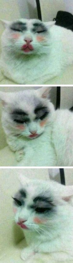Funny Cat with Makeup