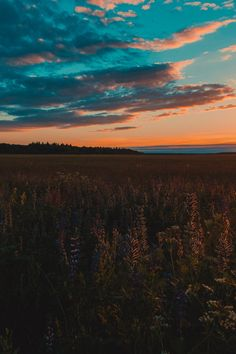 19b52a8dbb903 4593 Best Sunset Photos images in 2018 | Sunset photos, Free stock ...