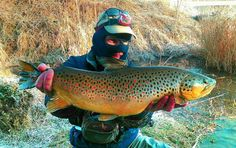 Ronnie Kittredge with a beautiful Brown Trout from the South Holston.