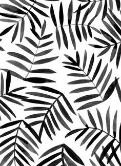 Black Leaves Ink Pattern And White Background Palm