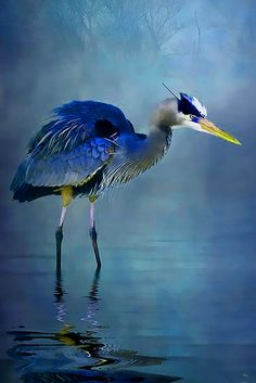 ⓕurry & ⓕeathery ⓕriends - photos of birds, pets & wild animals - Blue bayou. - heron.