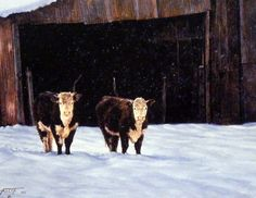 Tim Cox Hick's Hereford Heifers