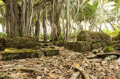 Diego Garcia Banyan Tree Cemetary 2011 Diego Garcia, Travel Abroad, Our World, Far Away, Cemetery, Travel Photos, Exotic, To Go, Death