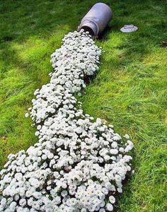 15 Creative DIY Spring Garden Projects A river of white flowers to add intrigue to any garden! This pin leads to fabulous garden ideas. The post 15 Creative DIY Spring Garden Projects appeared first on Ideas Flowers. Hardy Perennials, Flowers Perennials, Hardy Plants, Dream Garden, Garden Art, Garden Planters, Garden Oasis, Garden Pond, Big Garden