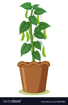 A bean plant in pot vector image on VectorStock Decoupage Printables, Free Printables, Plant Cartoon, Bean Plant, Garden Works, Plant Science, Home Learning, Garden Crafts, Spring Garden
