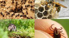 Ant Control Poolville TX 76487 Pest Control