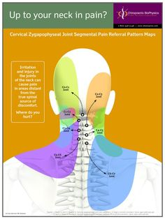 Nerve pain can effect all areas of the head, neck and shoulder. Muscle Anatomy, Body Anatomy, Examen Clinique, Neck Exercises, Reflexology Massage, Lymph Massage, Spine Health, Medical Anatomy, Neck And Shoulder Pain