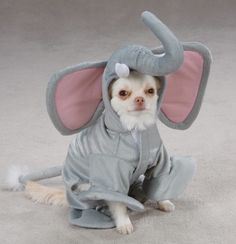 dressing up your chihuahua like an elephant won't make it look any bigger lol Funny Animal Photos, Animal Pictures, Funny Animals, Cute Animals, Funny Pictures, Dog Halloween Costumes, Pet Costumes, Halloween 2, Chihuahua Love