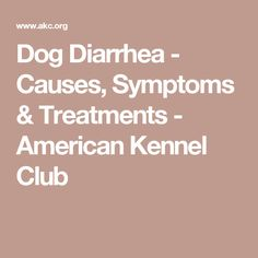 Dog Diarrhea - Causes, Symptoms & Treatments - American Kennel Club