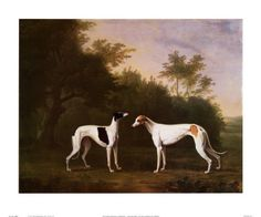 Greyhounds in art