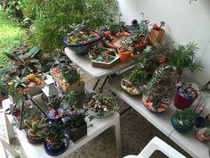 Jardín de suculentas y cactus