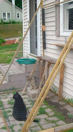 how to keep stray cats away from your property