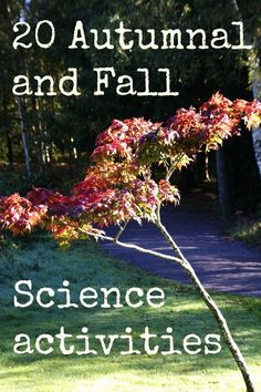 20 fall and Autumn science activity ideas