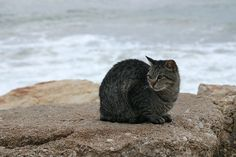Cat On Beach Click here to learn how to stop your cats from spraying in your house.