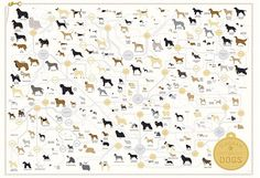 "(larger) Pop Chart Lab has created ""The Diagram of Dogs,"" a new art print that features 181 dog breeds. Signed and numbered prints are available to All Dogs, I Love Dogs, Cavalier King Charles Spaniel, Poster Online, Dog Poster, Poster Wall, Bow Wow, Hand Illustration, Working Dogs"