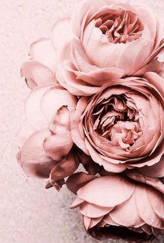 20 flores 13 mm rosa gefrostet