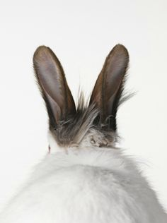 Ohhhh that delicate, soft spot behind a bunny's ears!! Oh, how I miss that spot!