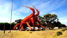 Big lobster in Kingston, SA