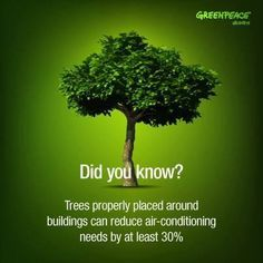 Plant more trees!!! Every yard should have at least one tree