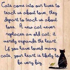 The purpose of cats