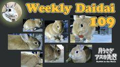 Weekly Daidai 109