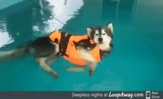 This guy was supposed to learn how to swim. He decided floating was good enough
