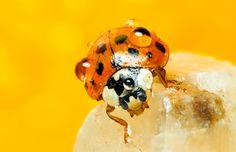 Wet Ladybug <3
