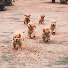 How cute is this Puppies?️ : EachWeek I will feature a few accounts! Use ️ … How cute is this Puppies🐾?❤️ 📸: EachWeek I will feature a few accounts! Super Cute Puppies, Cute Baby Dogs, Cute Little Puppies, Cute Dogs And Puppies, Cute Little Animals, Cute Funny Animals, Doggies, Cute Pups, Baby Animals Pictures