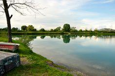 Siamo sempre sul lago dei cigni...